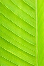 Ecological paints | Vechro Paints